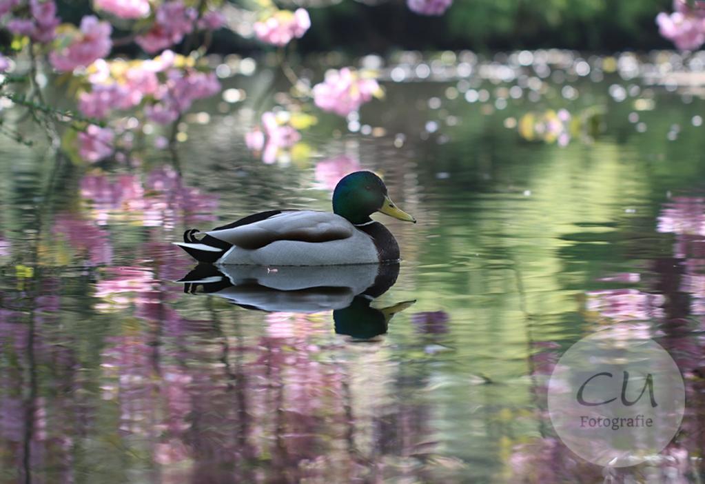 Frühlingsboten im Japanischen Garten
