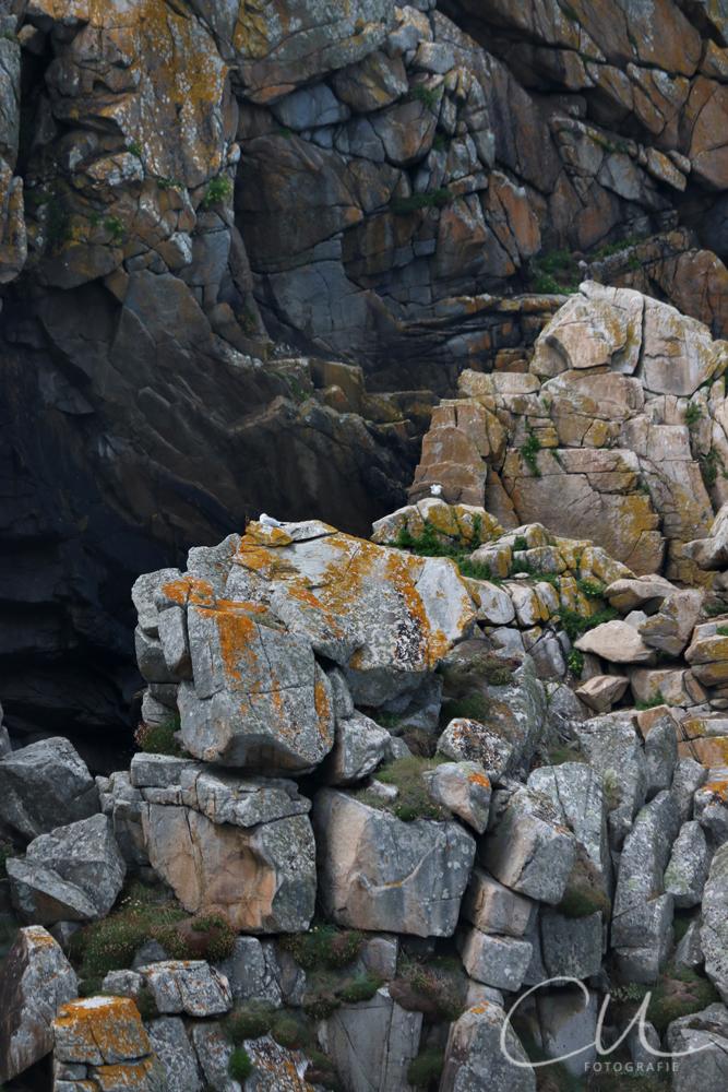 Viele Seevögel und eine wild zerklüftete Felsenküste