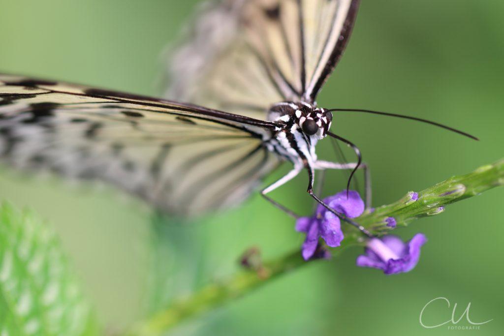Schmetterlinge, Sonnenschein und viele kleine Blumen